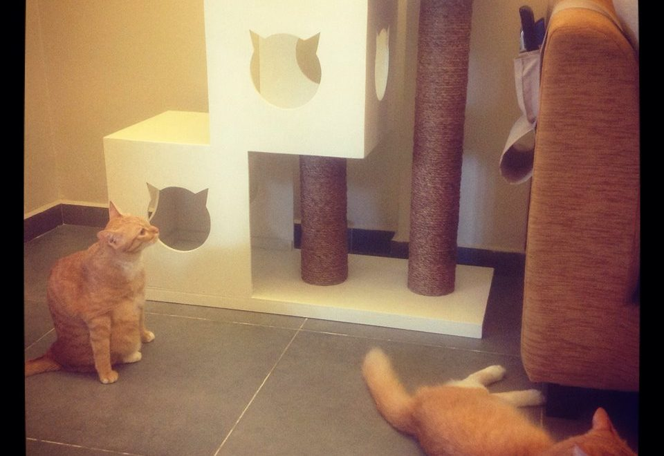 Cat Tree Buat Tuty's Guest House